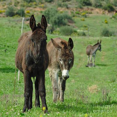 Donkey Photograph - Donkey Family by Angelo DeVal