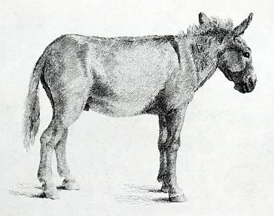 Donkey Print by George Stubbs