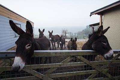 Donkey Photograph - Donkeys by Dawn OConnor