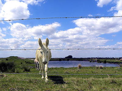 Fine Art Photograph - Don't Fence Me In 002 by Chris Mercer