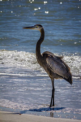Heron Photograph - Don't Make Me Fly by Marvin Spates