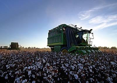 Cotton Photograph - Double Deeere by David Zarecor