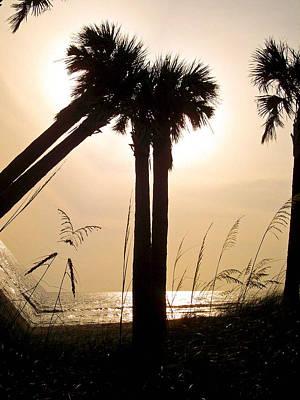 Beach Photograph - Double Palms by Trish Tritz