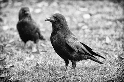 Crow Photograph - Double Trouble by Owen Calvert