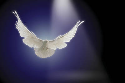 Dove Flying Through Beam Of Light Print by Comstock Images