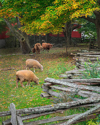 Southern New England Photograph - Down On The Farm 2015 by Bill Wakeley