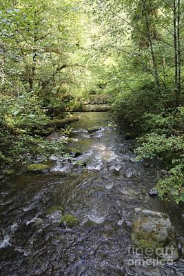 Log Cabin Art Photograph - Downstream by Carol Groenen