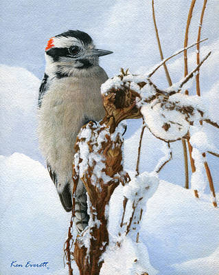 Woodpecker Painting - Downy Woodpecker  by Ken Everett