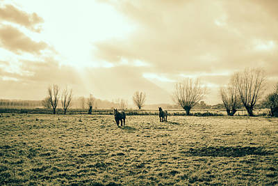 Belgian Draft Horse Photograph - Draft Horses In A Pasture by Pati Photography