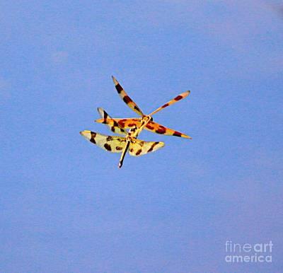 Blue Dragon Photograph - Dragon Fly-3 by Robert Pearson