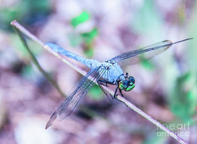 Dragon Fly Photograph - Dragon Fly by Pamela Williams