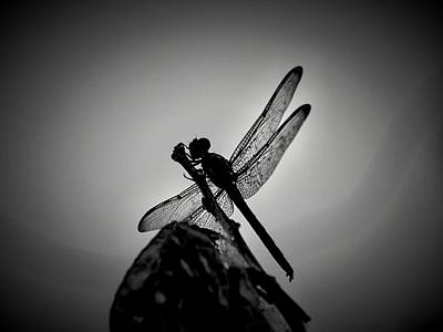Dragon Fly Print by William Jones