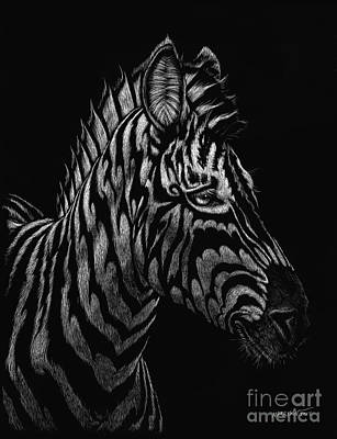 Scratchboard Painting - Dragon Zebra by Stanley Morrison