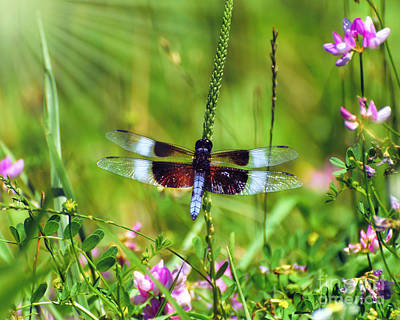 Dragonfly Photograph - Dragonfly Delight by Kerri Farley