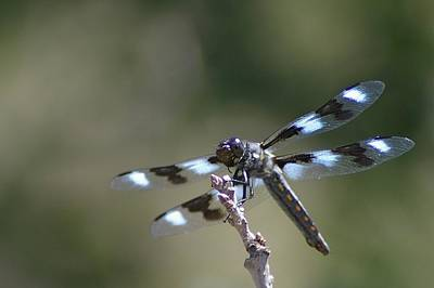 Dragonfly Hanging On  Print by Jeff Swan