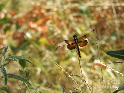 Dragonflies Photograph - Dragonfly In Field by Tracy Habenicht