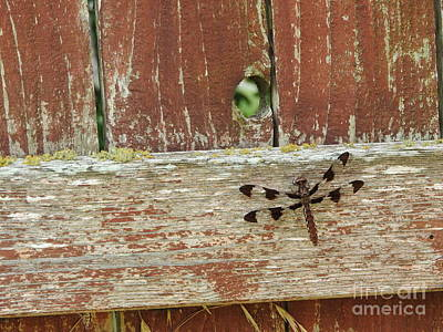 Dragonfly Photograph - Dragonfly On Fence by Tracy Habenicht