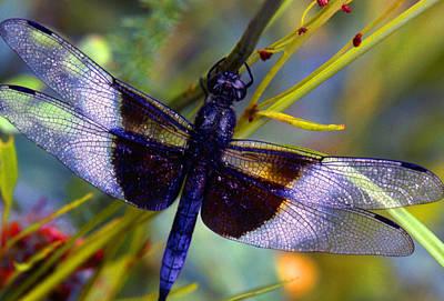 Dragonfly Print by Tony Ramos