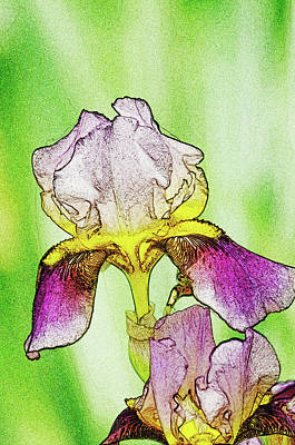 Drawing Of Dear Iris Print by Photo Captures by Jeffery
