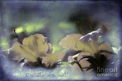 Flower Express Photograph - Dream by Jean OKeeffe Macro Abundance Art