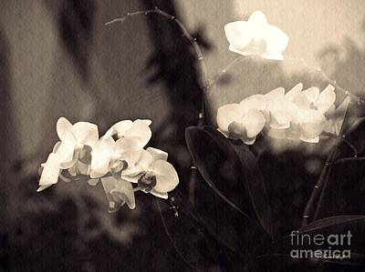 Orchids Digital Art - Dream State  Sepia by Sarah Loft