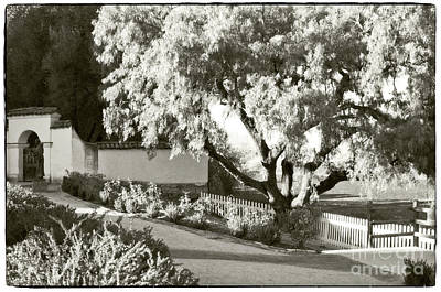 Mission San Juan Bautista Photograph - Dream Tree by Michael Ziegler