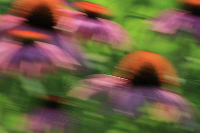 Abstracted Coneflowers Photograph - Dreaming Of Flowers by Karol Livote