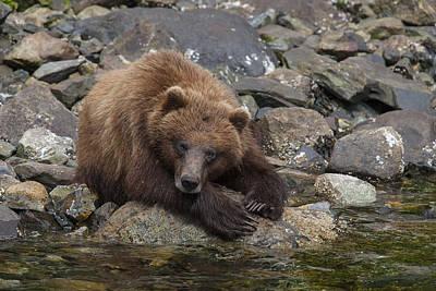 Prints Of Alaska Photograph - Dreaming Of Salmon by Tim Grams
