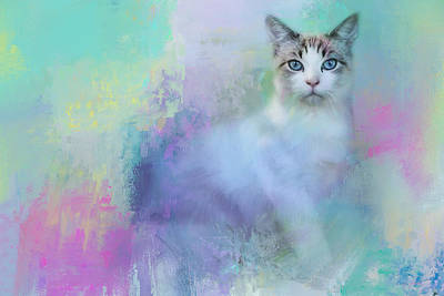 Kitten Photograph - Dreaming Of Spring by Jai Johnson