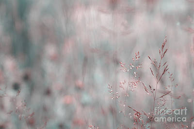 Decor Nature Photograph - Dreamland - 08 by Variance Collections