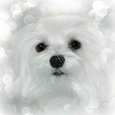 Dog Photograph - Dreams In White by Morag Bates