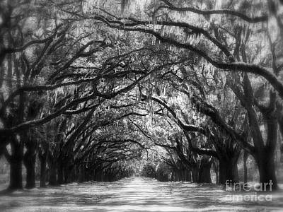 Dreams Of The Old South Print by Carol Groenen