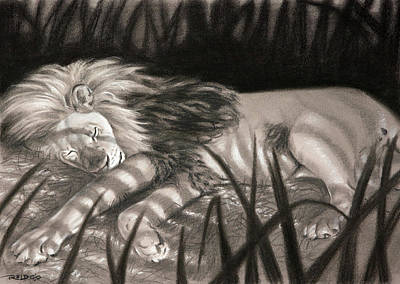 African Big Cats Drawing - Dreams Of Zebras by Christopher Reid