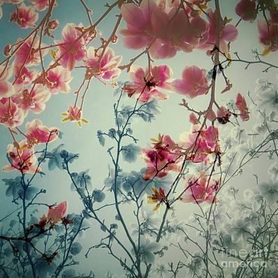 Dreamy Blossoms Print by Patricia Strand