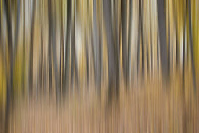 Impressionistic Landscape. Fall Photograph - Dreamy Forest by Tom Mc Nemar