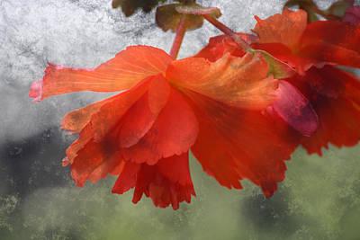Dreamy Tangerine Print by Julie Lueders