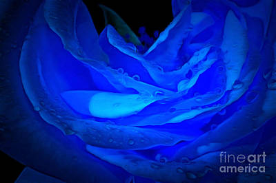 Blue Flowers Photograph - Dressed In Blue by Krissy Katsimbras