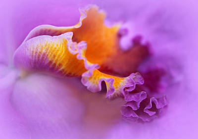 Orchid Digital Art - Dressed In Purple by Jessica Jenney