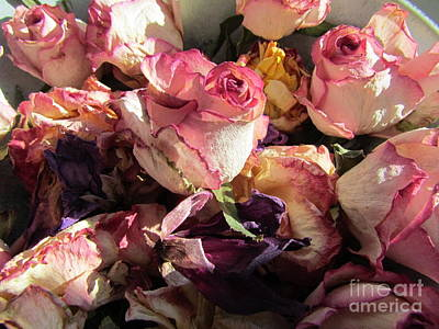 Photograph - Driede Roses  by Joyce Woodhouse