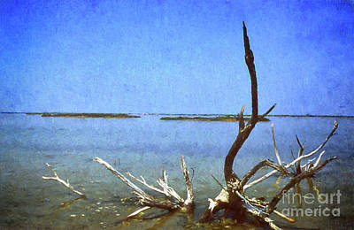 Painterly Photograph - Drift Wood, Carmargue,france. by Robert Brown