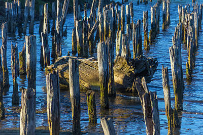 Driftwood Among Pile Posts Print by Garry Gay