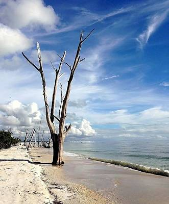 Photograph - Driftwood At Lovers Key State Park by Janet King