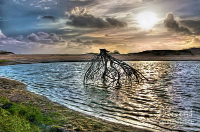 Driftwood In A Tide Pool Outer Banks Ap Print by Dan Carmichael
