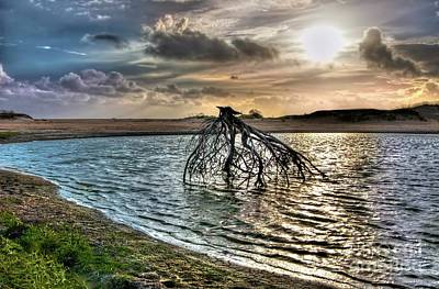 Driftwood In A Tide Pool Outer Banks Print by Dan Carmichael