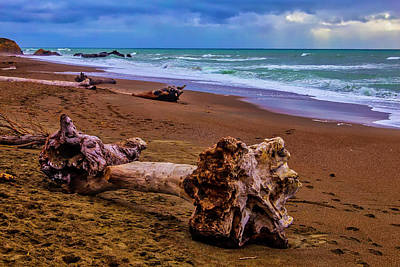 Luis Photograph - Driftwood Moonstone Beach by Garry Gay
