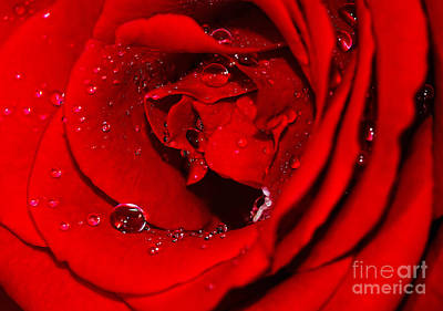 Droplets On Red Rose By Kaye Menner Print by Kaye Menner