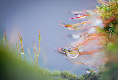Landskape Photograph - Drops Of Rain by Zelma Brezinska