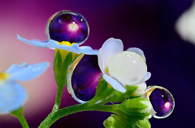 Drops, Reminiscent Of The Jewels On The Flowers Original by Yuri Hope