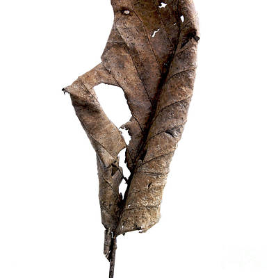 Cut Out Photograph - Dry Leaf by Bernard Jaubert