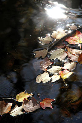 Painted Reveries Photograph - Dry Leaves Floating On The Surface Of A Stream by Emanuel Tanjala